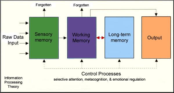 late adulthood cognitive development essay